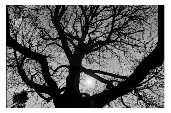 arbre-montmartre-1.jpg